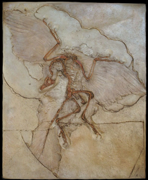 an analysis of archaeopteryx fossils during the jurassic period Archaeopteryx lived in the early jurassic period, 1508-1485 million years ago most of the specimens of archaeopteryx that have been found come from the solnhofen limestone in bavaria , germany , which is a lagerstätte , a rare and stunning geological formation known for its superbly full fossils.