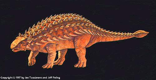 http://ornithodira.narod.ru/DinoData/Ankylosaurus/Ankylosaurus-magniventris/Ankylosaurus_shape_3_I.jpg